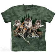 Find 12 Wolves