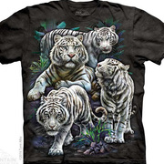 Majestic White Tigers
