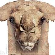 Big Face Camel